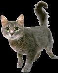 kitty grey