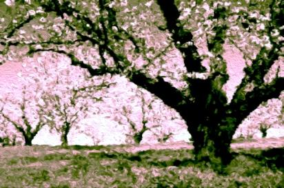 Awake - Spring